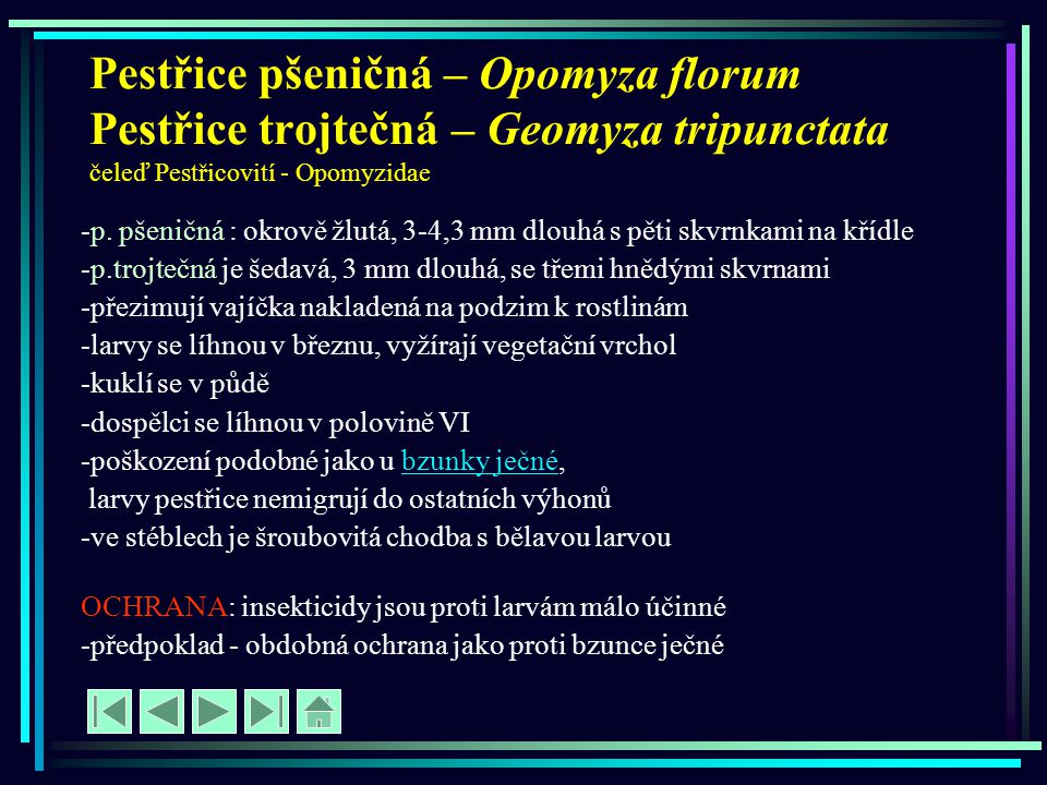 Pestřice pšeničná – Opomyza florum Pestřice trojtečná – Geomyza tripunctata čeleď Pestřicovití - Opomyzidae