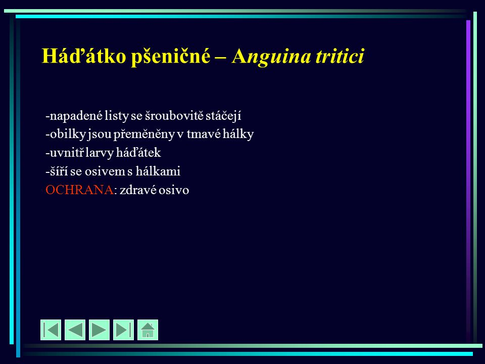 Háďátko pšeničné – Anguina tritici