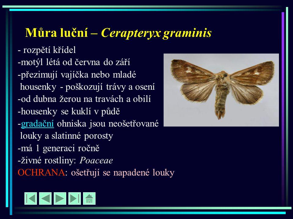 Můra luční – Cerapteryx graminis