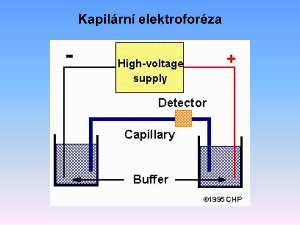 Kapilární elektroforéza