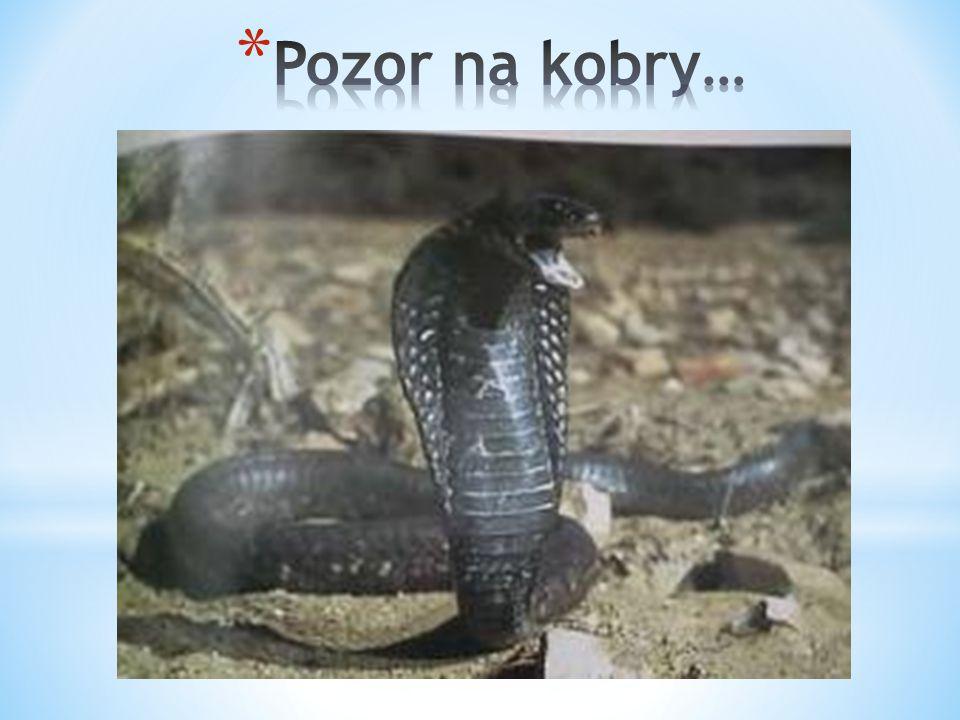 Pozor na kobry…
