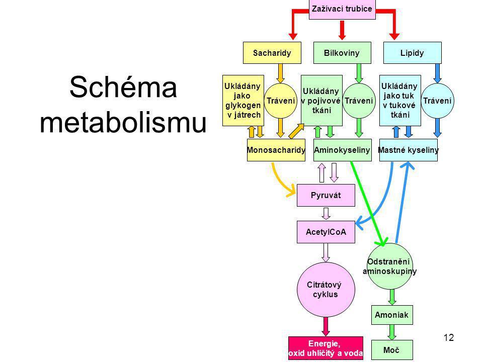 Schéma metabolismu Zažívací trubice Sacharidy Bílkoviny Lipidy