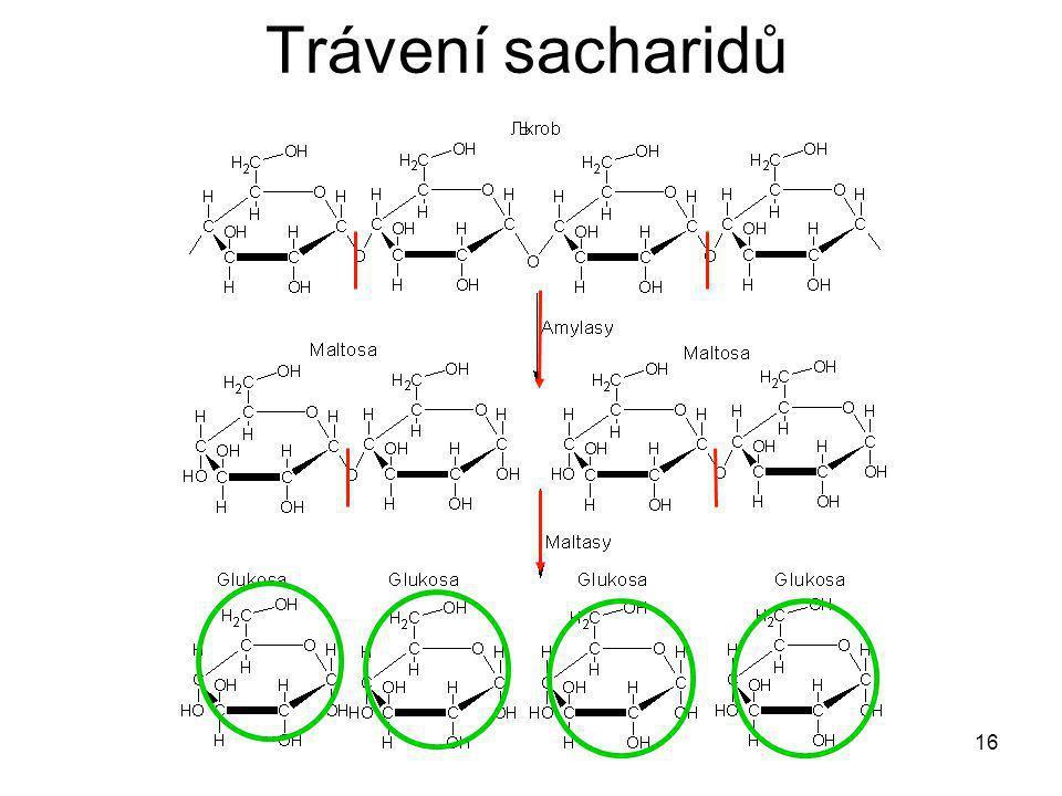 Trávení sacharidů