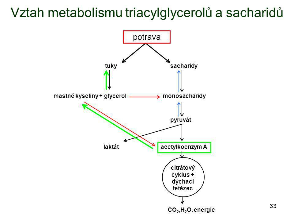 Vztah metabolismu triacylglycerolů a sacharidů