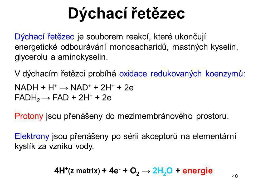 4H+(z matrix) + 4e- + O2 → 2H2O + energie