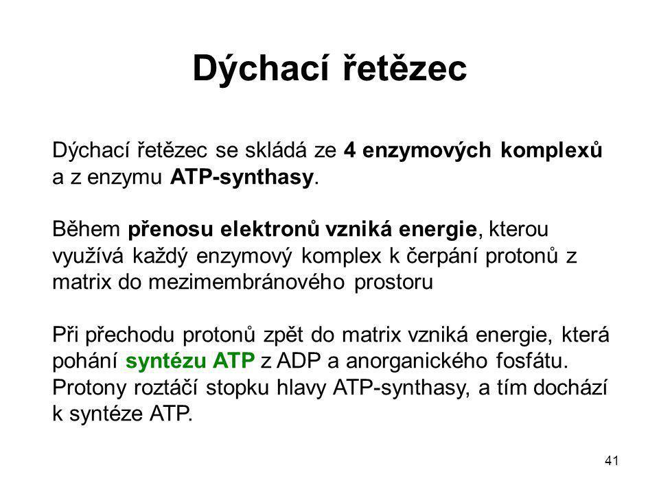 Dýchací řetězec Dýchací řetězec se skládá ze 4 enzymových komplexů a z enzymu ATP-synthasy.
