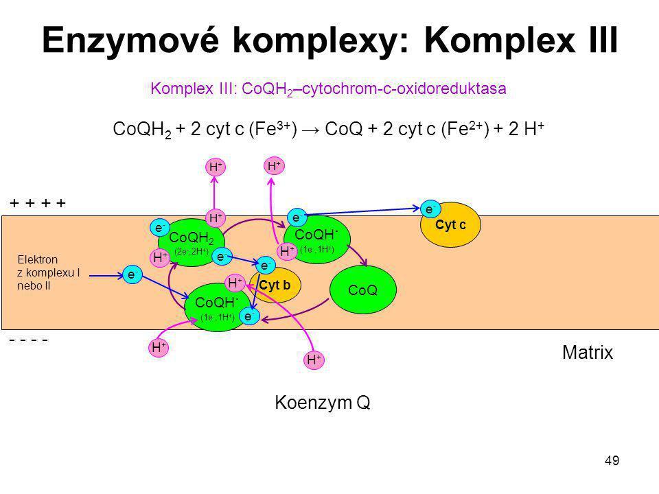 Enzymové komplexy: Komplex III