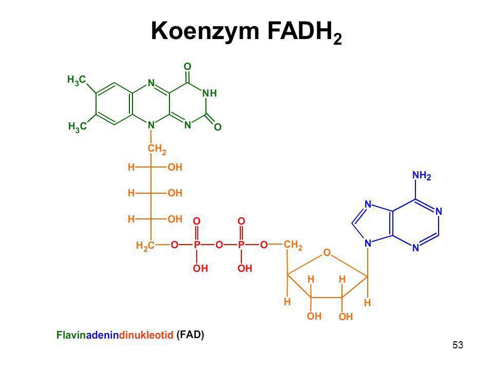 Koenzym FADH2