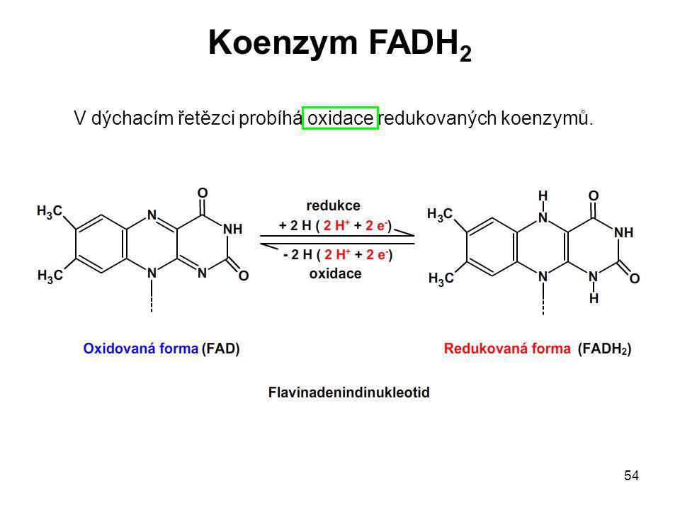 Koenzym FADH2 V dýchacím řetězci probíhá oxidace redukovaných koenzymů.
