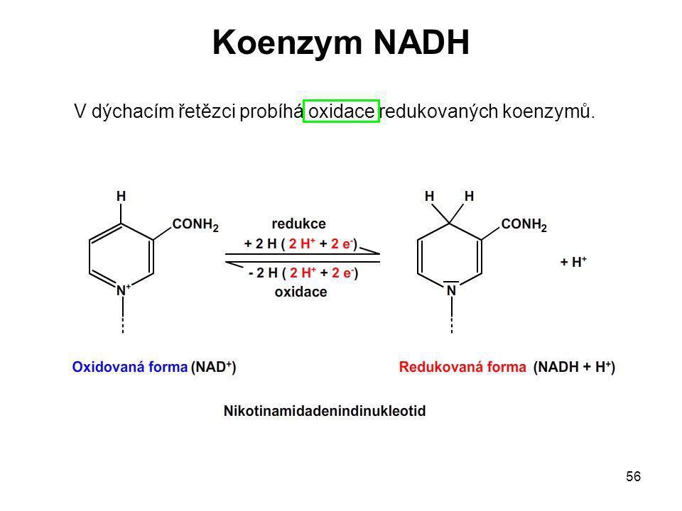 Koenzym NADH V dýchacím řetězci probíhá oxidace redukovaných koenzymů.