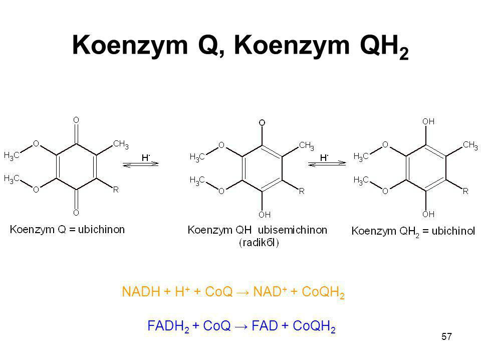 NADH + H+ + CoQ → NAD+ + CoQH2