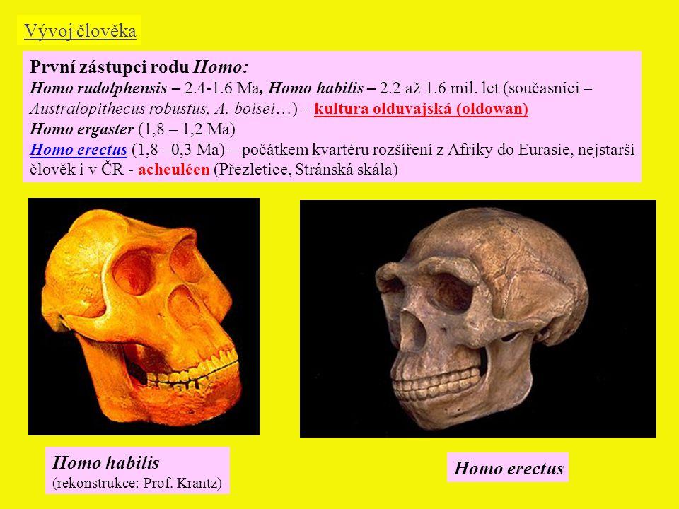 První zástupci rodu Homo:
