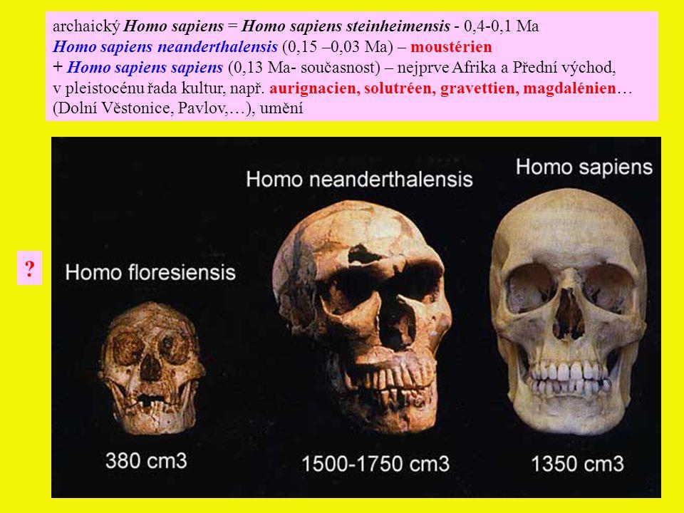 archaický Homo sapiens = Homo sapiens steinheimensis - 0,4-0,1 Ma