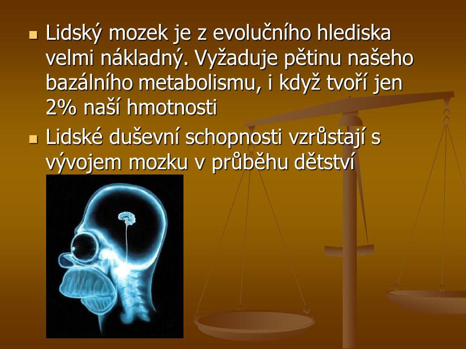 Lidský mozek je z evolučního hlediska velmi nákladný