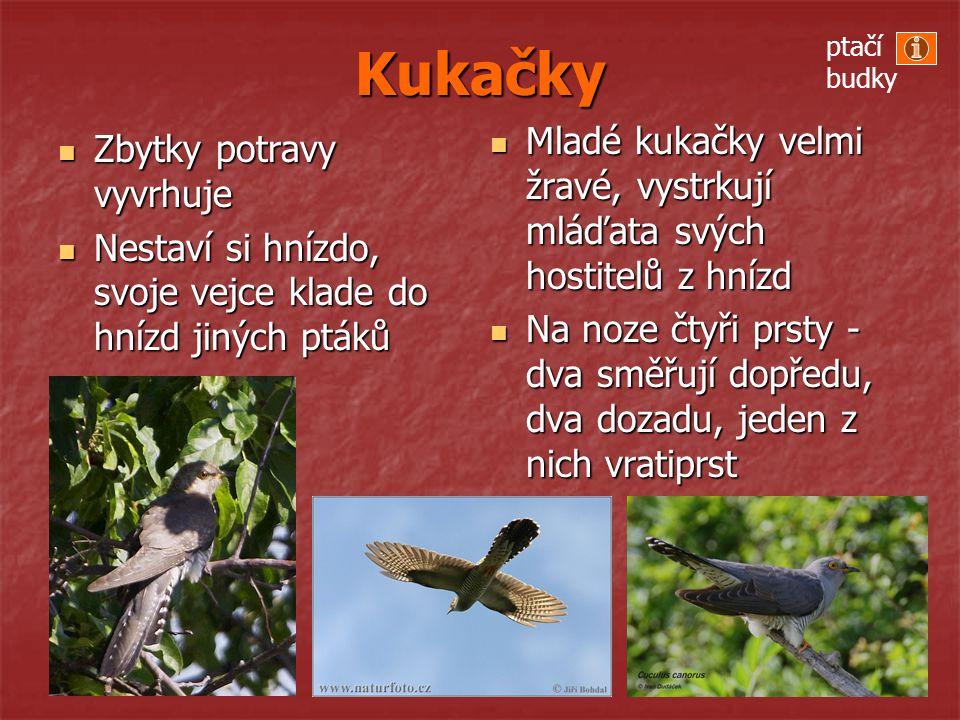 Kukačky ptačí budky. Mladé kukačky velmi žravé, vystrkují mláďata svých hostitelů z hnízd.
