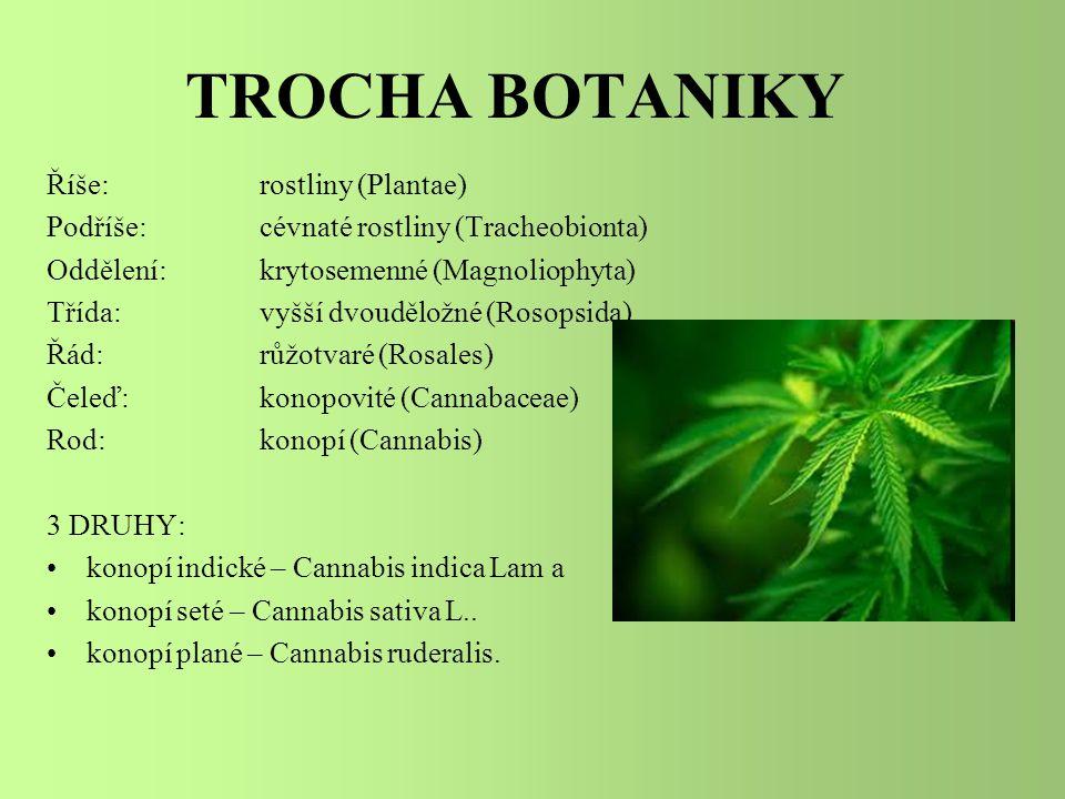 TROCHA BOTANIKY Říše: rostliny (Plantae)