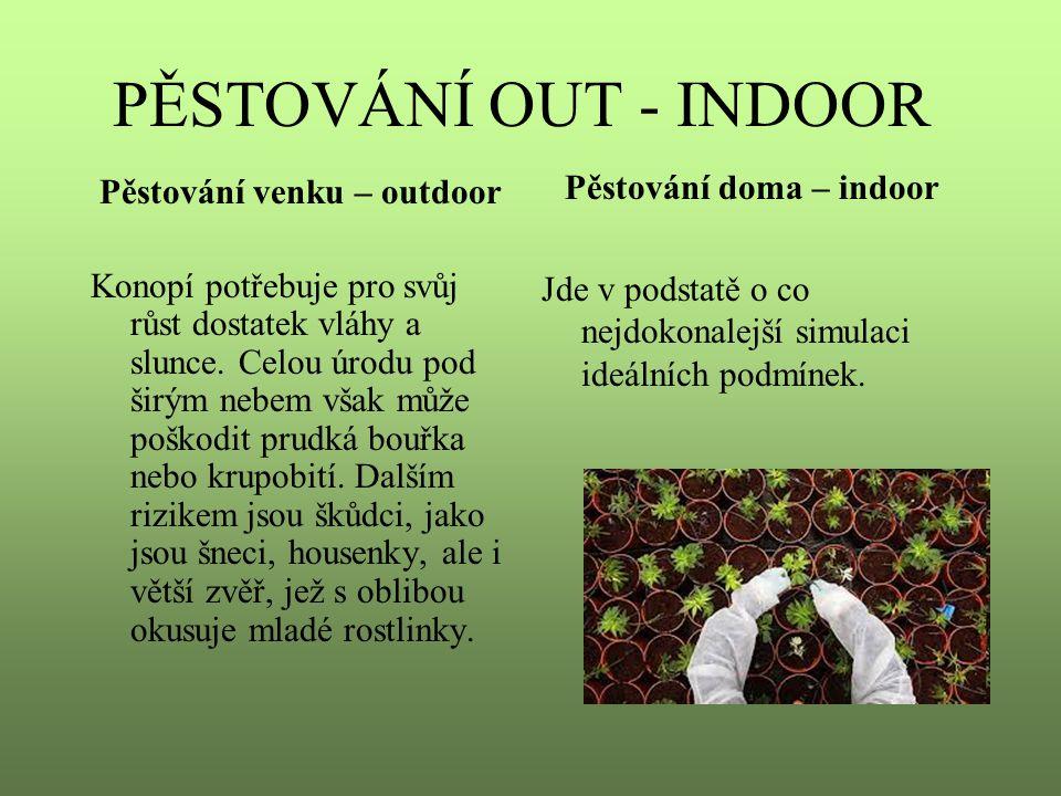 Pěstování doma – indoor Pěstování venku – outdoor