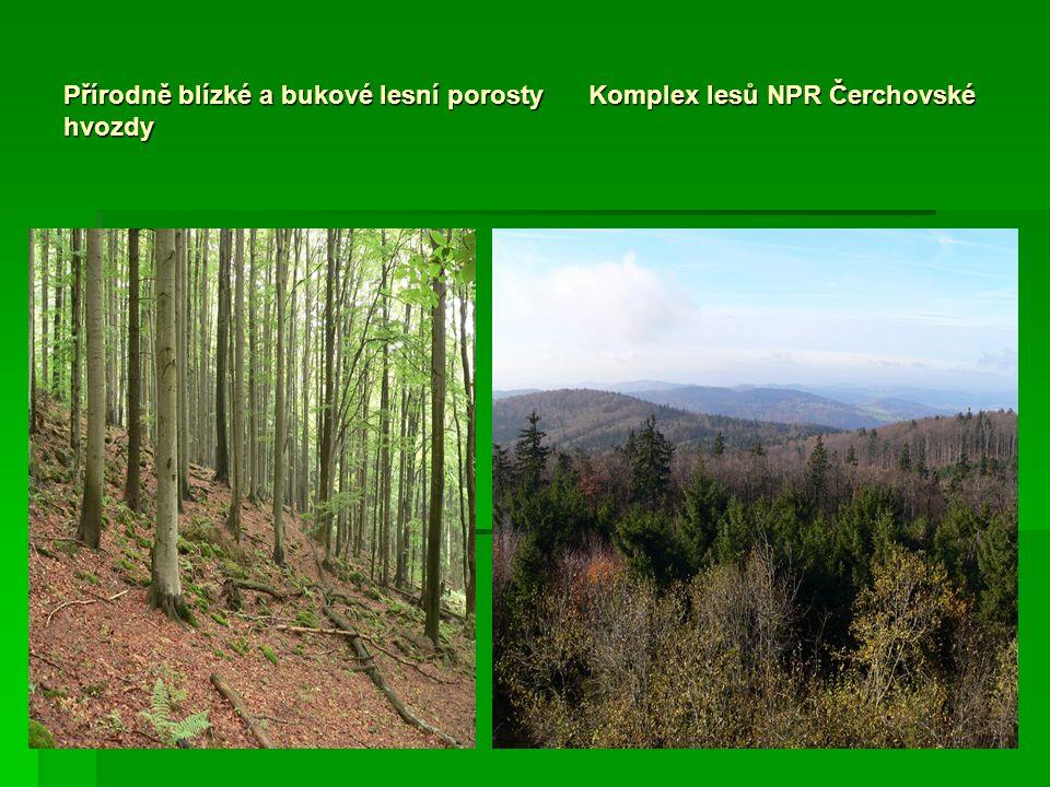 Přírodně blízké a bukové lesní porosty