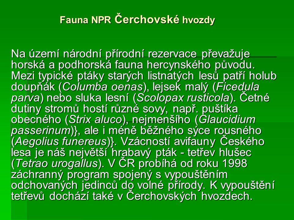 Fauna NPR Čerchovské hvozdy