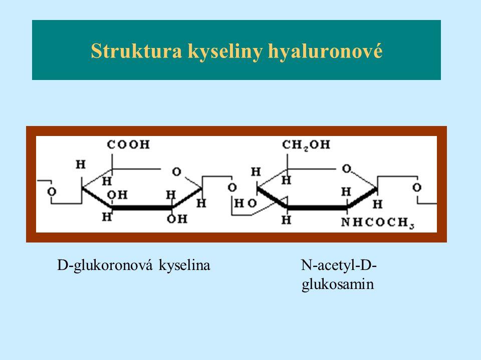 Struktura kyseliny hyaluronové