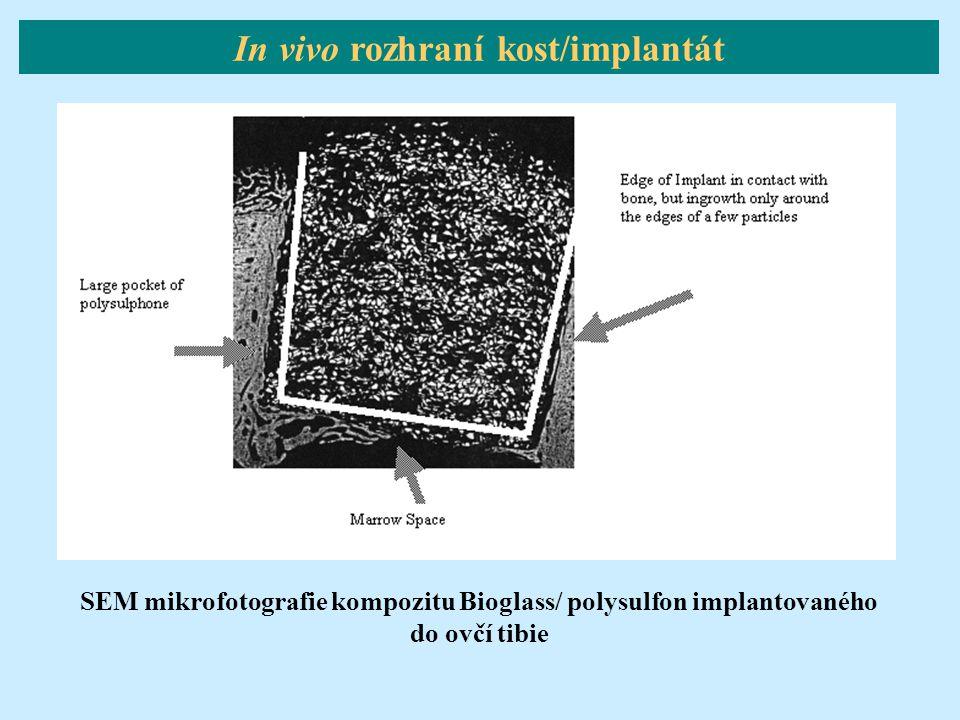 In vivo rozhraní kost/implantát