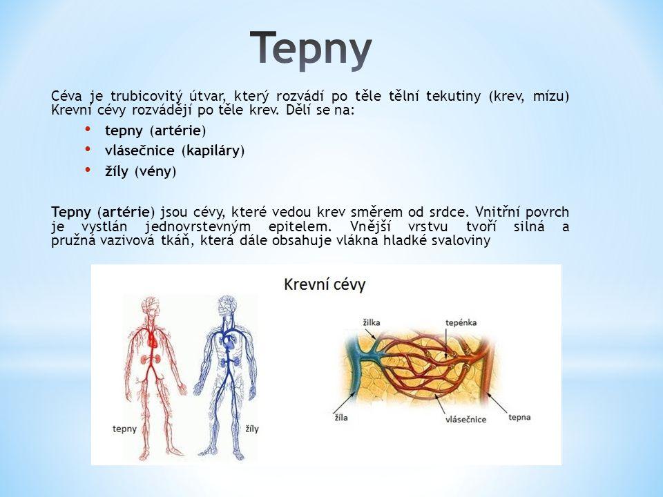 Tepny Céva je trubicovitý útvar, který rozvádí po těle tělní tekutiny (krev, mízu) Krevní cévy rozvádějí po těle krev. Dělí se na: