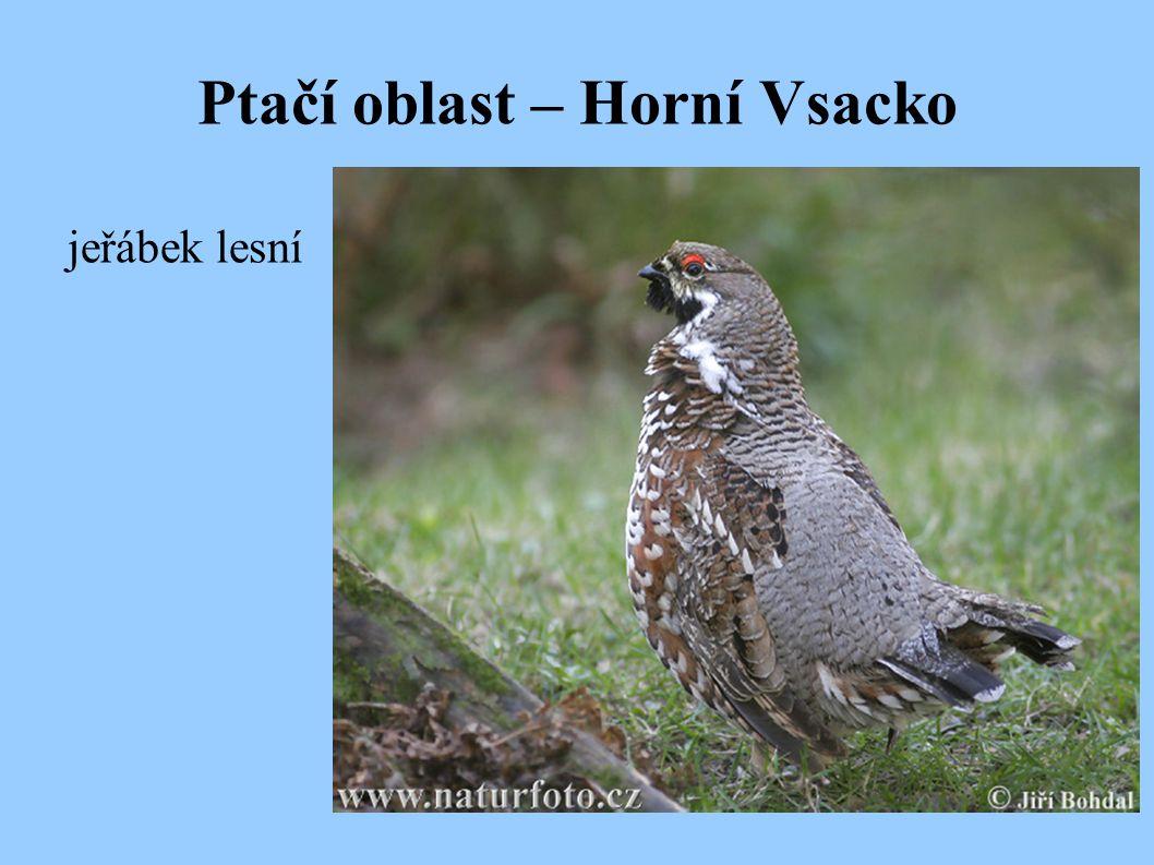Ptačí oblast – Horní Vsacko
