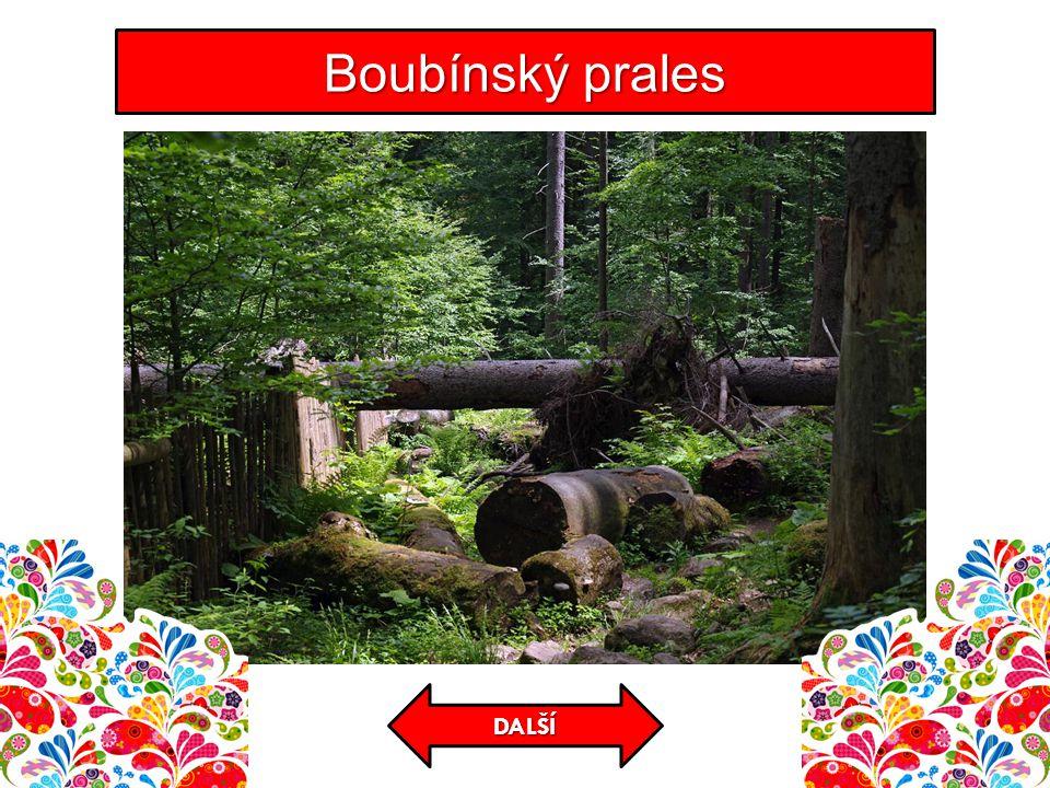 Boubínský prales DALŠÍ