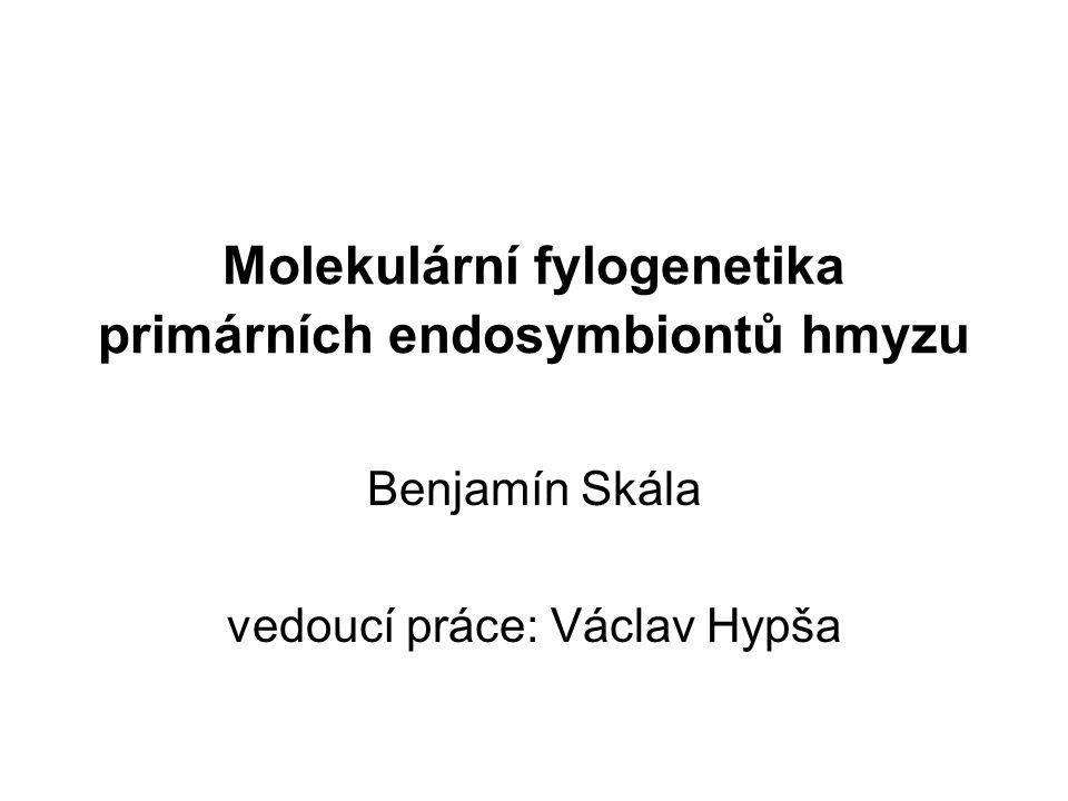 Molekulární fylogenetika primárních endosymbiontů hmyzu