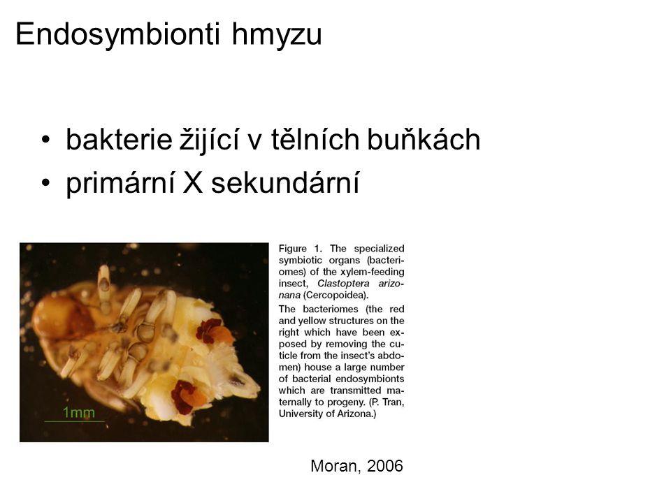 Endosymbionti hmyzu bakterie žijící v tělních buňkách