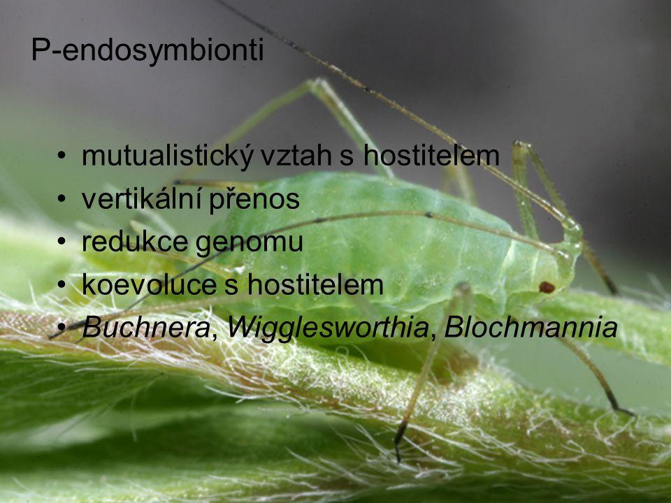 P-endosymbionti mutualistický vztah s hostitelem vertikální přenos