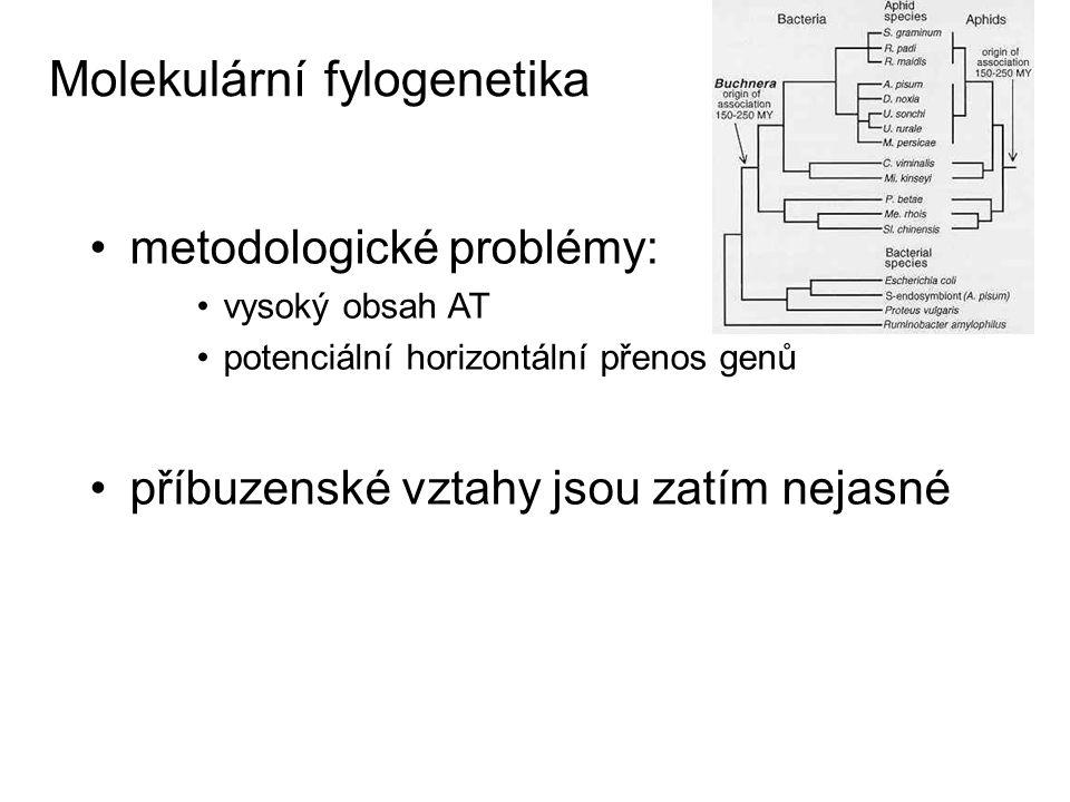 Molekulární fylogenetika