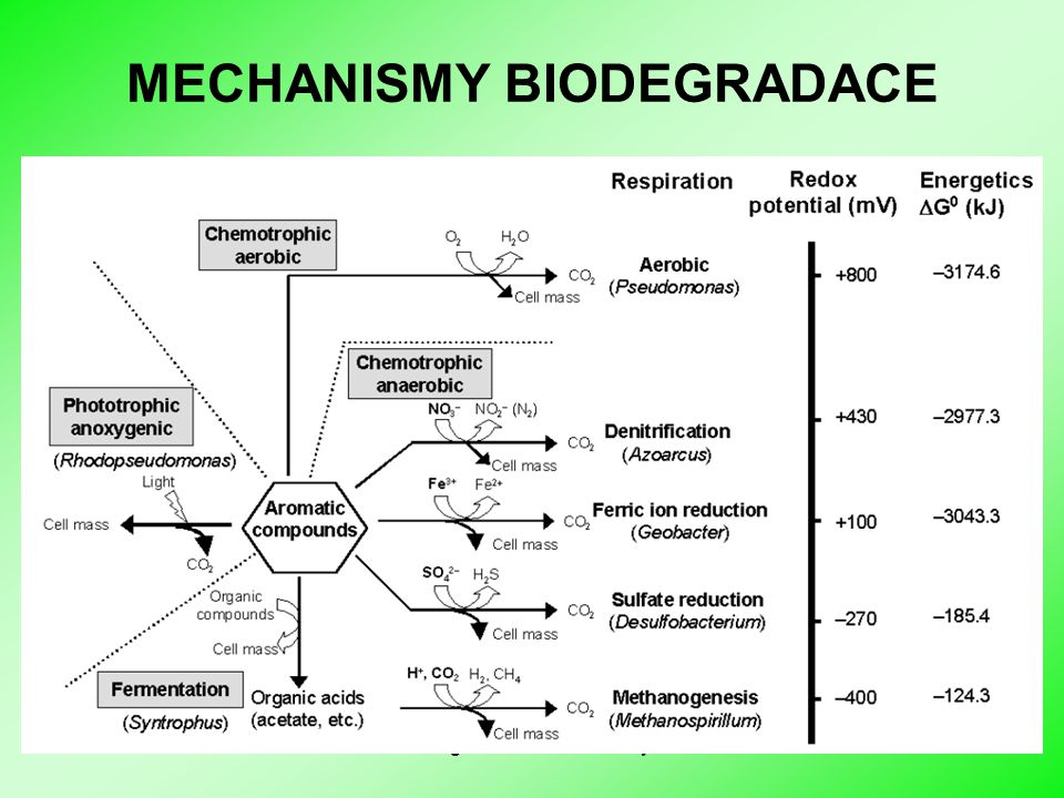 MECHANISMY BIODEGRADACE