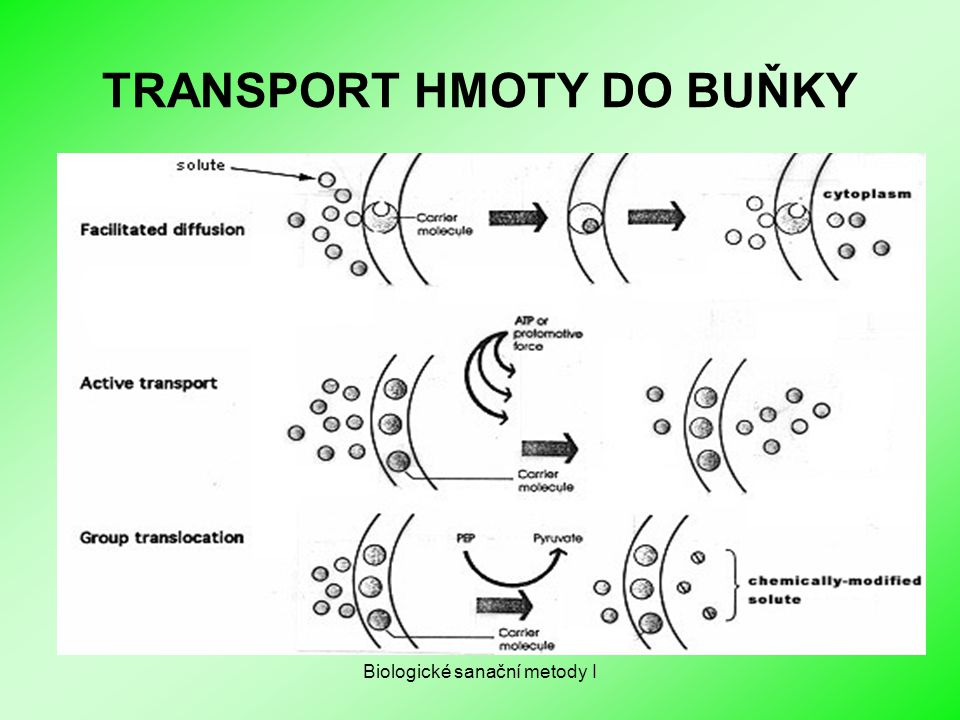 TRANSPORT HMOTY DO BUŇKY