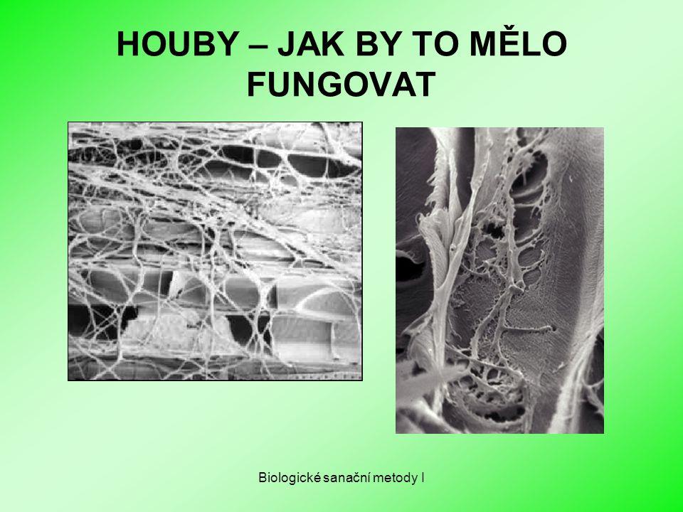 HOUBY – JAK BY TO MĚLO FUNGOVAT