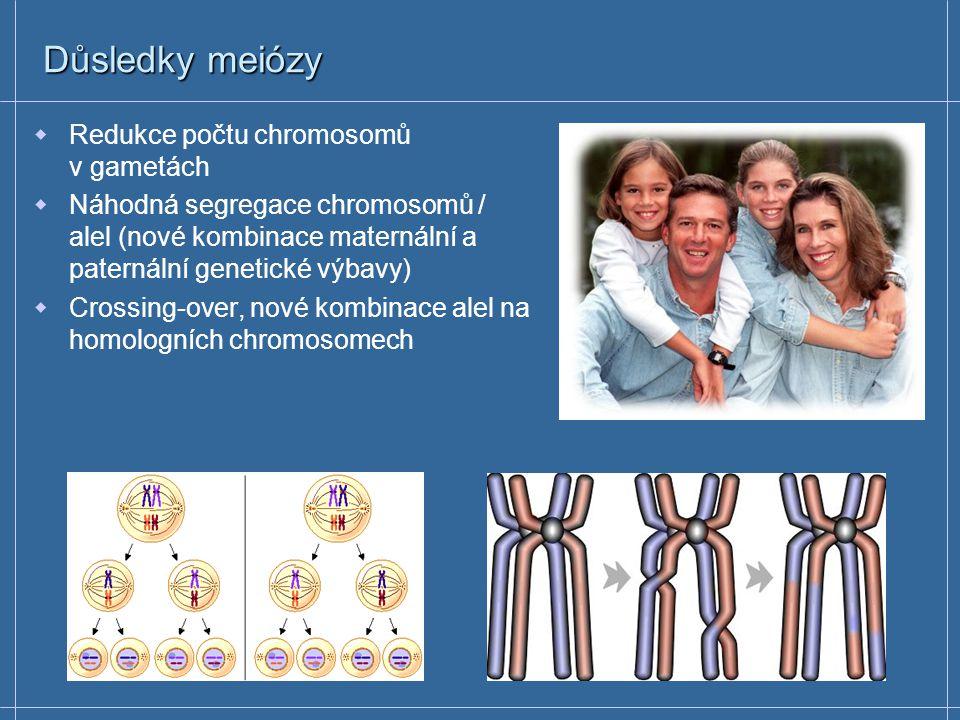 Důsledky meiózy Redukce počtu chromosomů v gametách