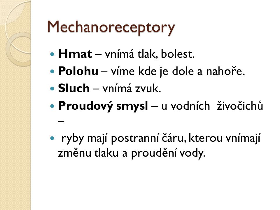 Mechanoreceptory Hmat – vnímá tlak, bolest.