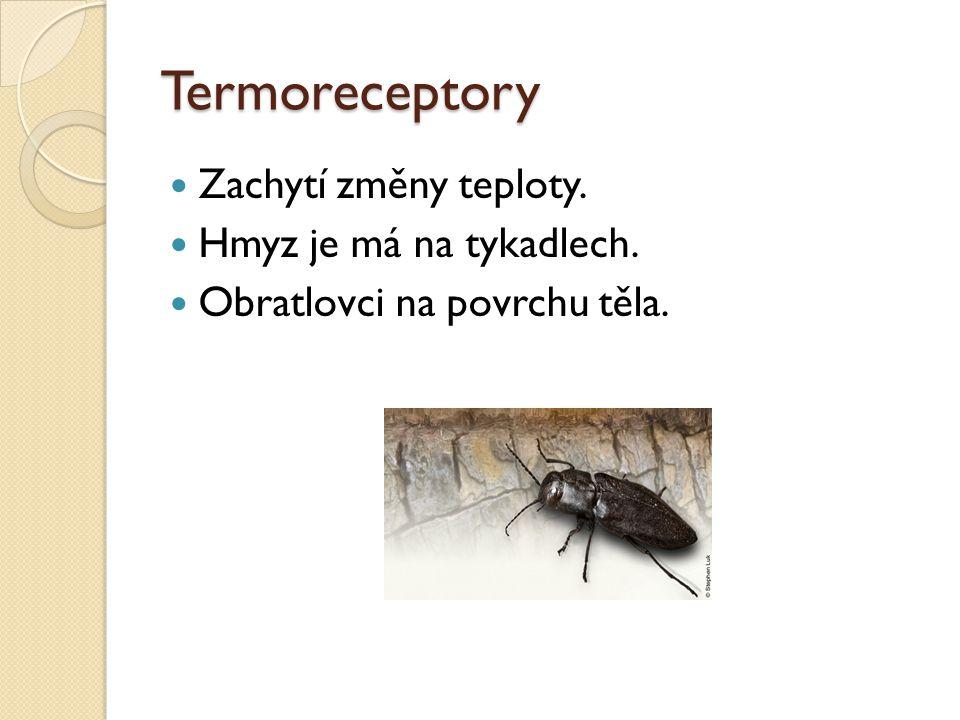 Termoreceptory Zachytí změny teploty. Hmyz je má na tykadlech.