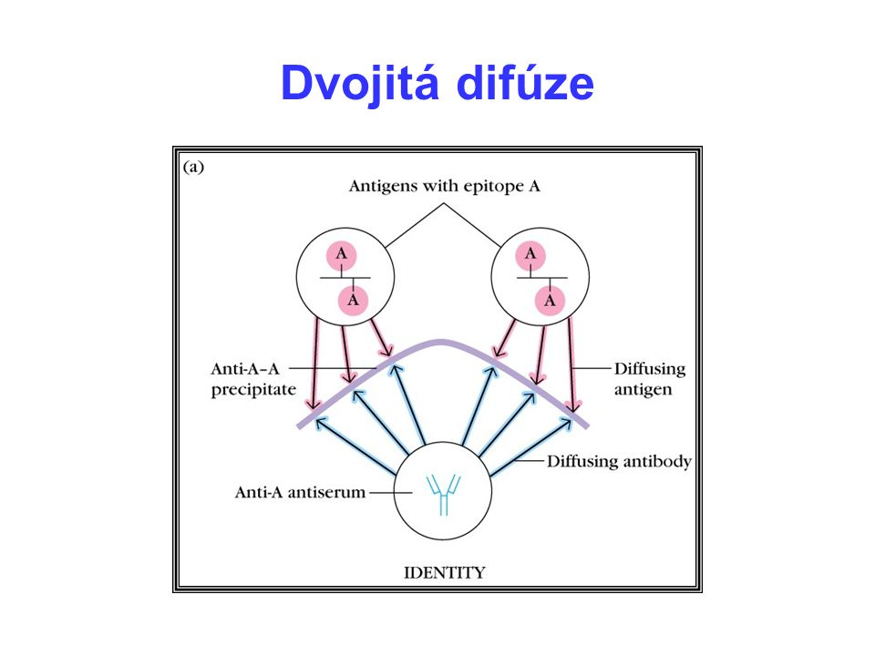 Dvojitá difúze 10