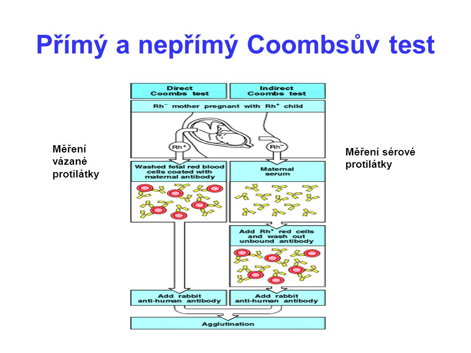 Přímý a nepřímý Coombsův test