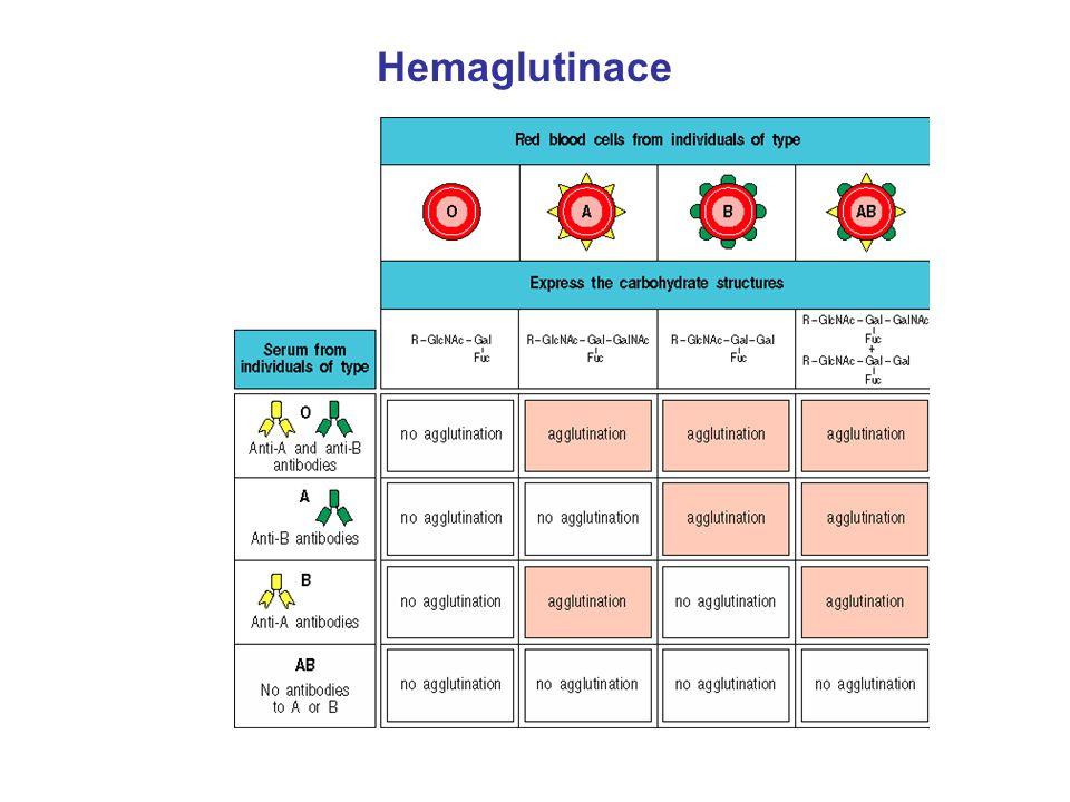 Hemaglutinace 22
