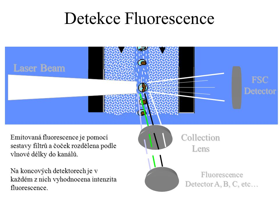 Detekce Fluorescence Laser Beam FSC Detector Collection Lens