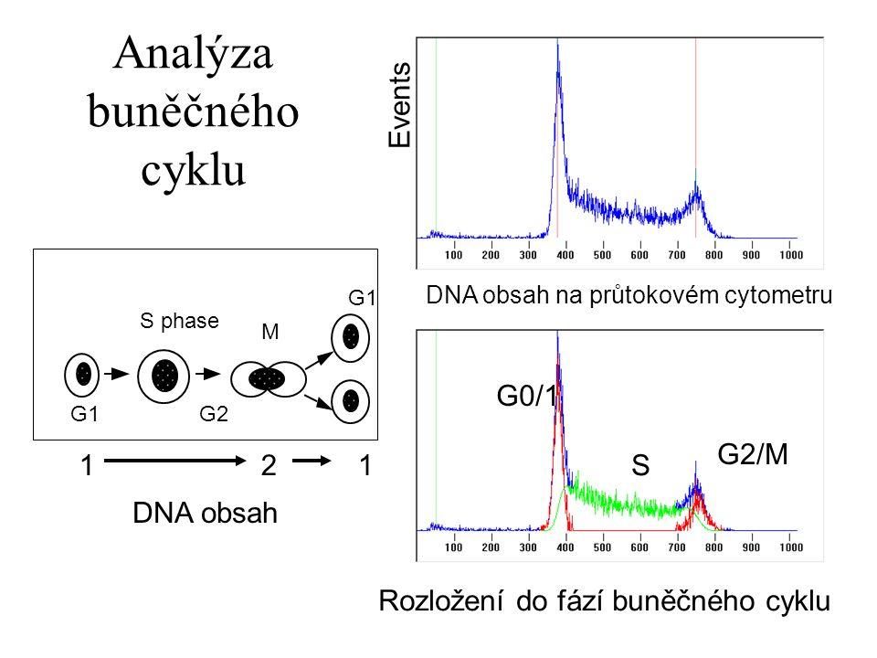 Analýza buněčného cyklu