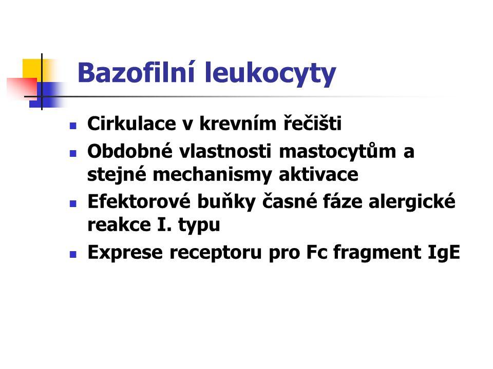 Bazofilní leukocyty Cirkulace v krevním řečišti