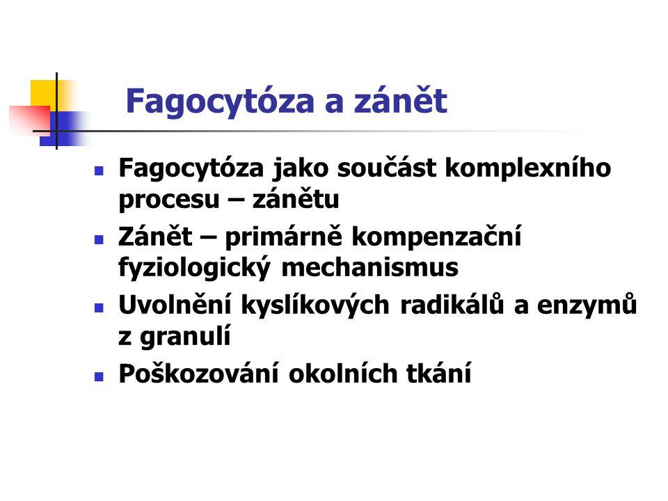 Fagocytóza a zánět Fagocytóza jako součást komplexního procesu – zánětu. Zánět – primárně kompenzační fyziologický mechanismus.