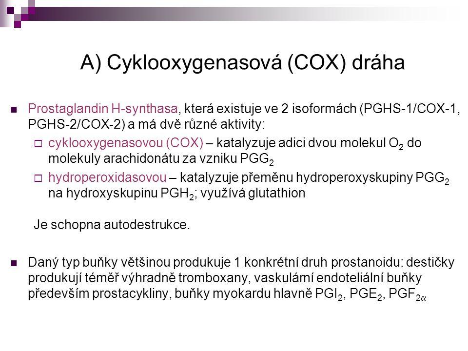 A) Cyklooxygenasová (COX) dráha