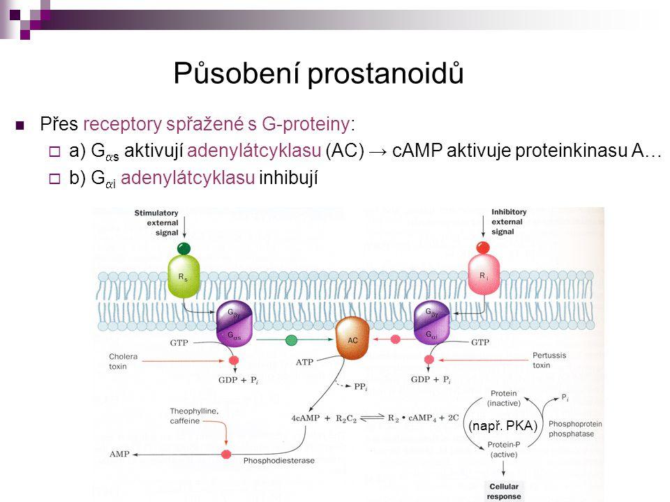 Působení prostanoidů Přes receptory spřažené s G-proteiny:
