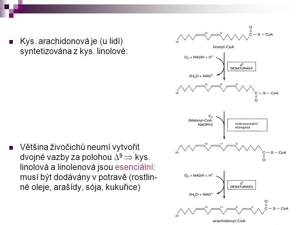 Kys. arachidonová je (u lidí) syntetizována z kys. linolové: