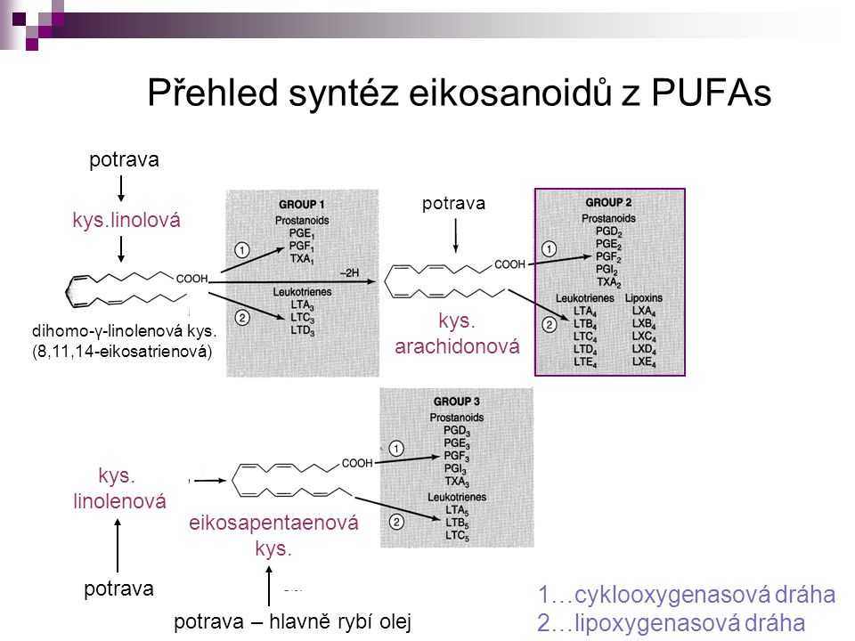Přehled syntéz eikosanoidů z PUFAs