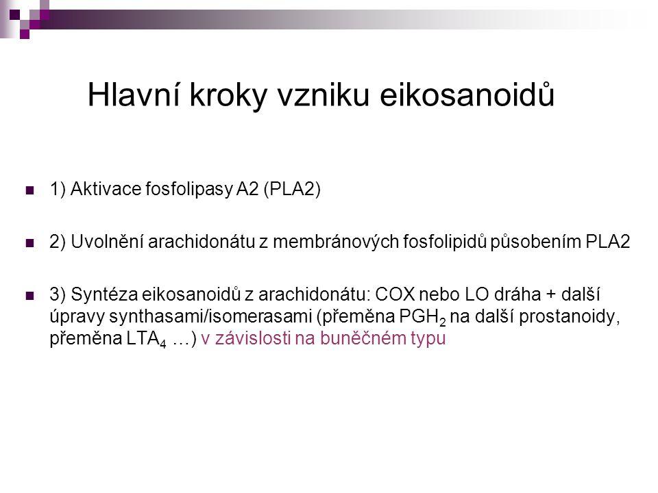 Hlavní kroky vzniku eikosanoidů